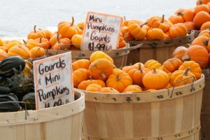 Farmers Market gourds and mini-pumpkins